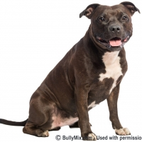 brown-pitbull-bully-breedss