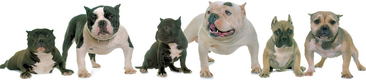 BullyMix.com Official Dog Store