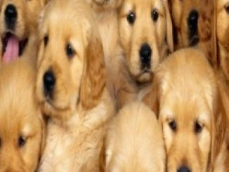 Breeding Puppies: How to Make Money Breeding Puppies (Breeding puppies, dog breeding, dog breeding book, dog breeding business, dog breeding supplies, … stand, breeding cage, breeding for dummies) Reviews