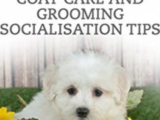 SHAMPOO THAT MALTIPOO: COAT CARE AND GROOMING SOCIALISATION TIPS Reviews