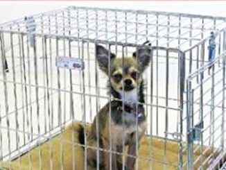 Puppy Crate Training Schedule: Schedule of Crate Training for Puppy When You are Working