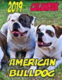 2019 Calendar American Bulldog: Dog weekly calendar, personal contacts list, password log, notes and to do list