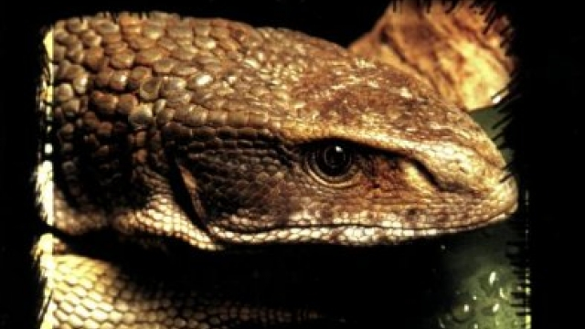 Savannah Monitors: A Complete Guide to Varanus Exanthematicus (Complete Herp Care)