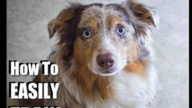 Australian Shepherd Dog Training with the ~ No BRAINER Dog TRAINER ~ We Make it THAT Easy!: How to EASILY TRAIN Your Australian Shepherd (Volume 1) Reviews