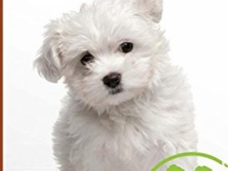 Maltese (Animal Planet: DOGS 101)