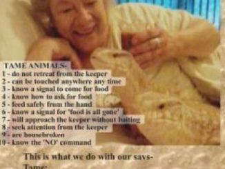 Taming Your Sav: The Savannah Monitor As A Household Pet