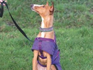 Your End of the Lead: Changing how you think and act to help your reactive dog