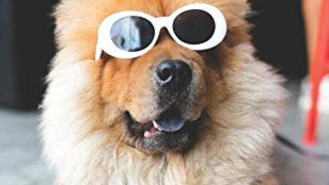 2019-2020 Monthly Pocket Planner: Funny Chow Chow Dog in Sunglasses (2 Year Agenda)