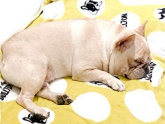 MSFREN Frenchie French Bulldog Super Soft Fleece Yellow Pet Bed Blanket Reviews