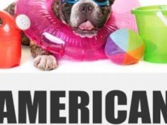 American Bulldog Toys: Training & Puppy Chew Toys for your American Bulldog