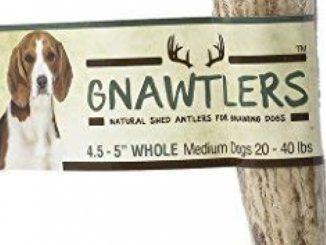 Gnawtlers – Premium Elk Antlers For Dogs, Naturally Shed Elk Antlers, USA Natural Elk Antler Chews, Specially Selected Elks Antlers From The Rocky Mountain & Heartland Regions – 4.5″- 5″ Elk Antler