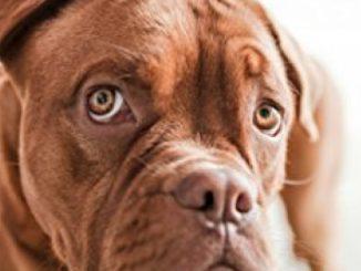 Dog Health, Dog Massage and Tips for Dog Skin Care: Dog Health Care Through Proper Skin Care Reviews