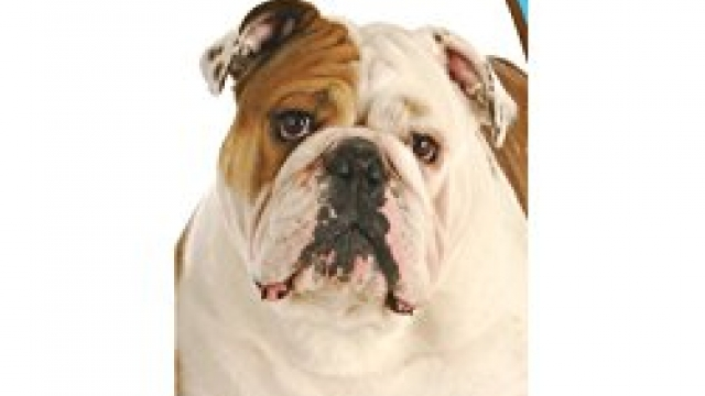Healthy Breeds 1063-buld-001 Bulldog Bright Whitening Shampoo, One Size/12 oz