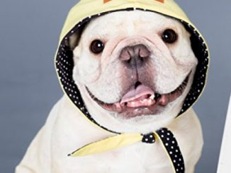 French bulldog clothing reversible Hood Yellow and Black White Dots Street hip hop Style for or Pug pet wear Frenchic Handmade Accessory