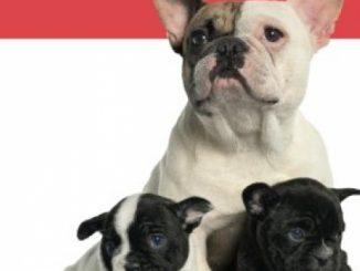 The French Bulldog Handbook (Canine Handbooks)