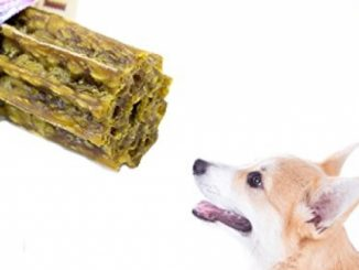 Delicious & Nutritious SunGrow Vegebrand Jumbo Dental Treat for Dogs – All Natural, Refreshing Dog Chew : Preventative Dental Care in an Irressistable Taste
