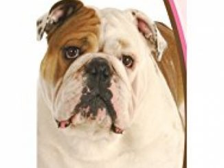 Healthy Breeds 1057-buld-001 Bulldog Deodorizing Shampoo, One Size/16 oz