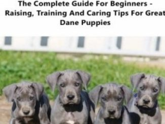 Great Dane Puppy Care & Training: The Complete Guide for Beginners – Raising, Training and Caring Tips for Great Dane Puppies!