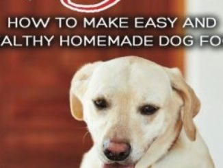 Dog Food Recipes: How to Make Easy and Healthy Homemade Dog Food