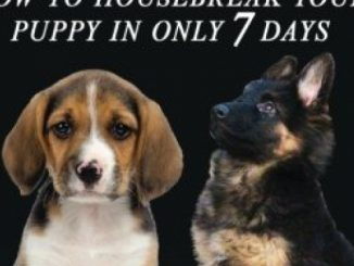Puppy training 2: How to housebreak your puppy in only 7 days