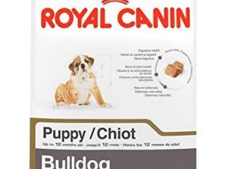 ROYAL CANIN BREED HEALTH NUTRITION Bulldog Puppy dry dog food, 6-Pound by Royal Canin Reviews
