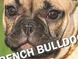 FRENCH BULLDOG TRAINING: All the tips you need for a well-trained French Bulldog Reviews