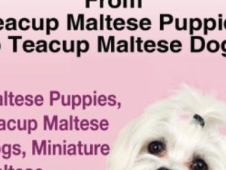 Teacup Maltese And Teacup Maltese Dogs: From Teacup Maltese Puppies to Teacup Maltese Dogs Includes: Maltese Puppies, Teacup Maltese Dogs, Miniature Maltese,  Temperament, Care, & More! Reviews