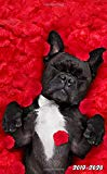 2019-2020: Nifty French Bulldog Floral Red Roses Two-Year Monthly Pocket Planner with Phone Book, Password Log and Notebook. Cute Small At A Glance Calendar, Organizer and Agenda. (Dog Lover Gifts)