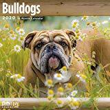 Bulldogs Wall Calendar 2020