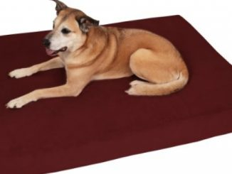 Big Barker 7″ Pillow Top Orthopedic Dog Bed – Large Size – 48 X 30 X 7 – Burgundy – for Large and Extra Large Breed Dogs (Sleek Edition)